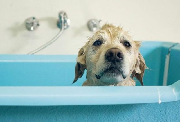 Cosas que debes considerar antes de darle una mascota a tus hijos - perro-bancc83o