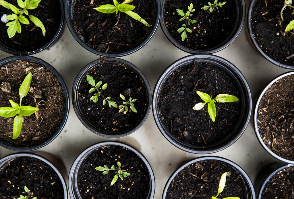 Remedios naturales que puedes tener en tu jardín