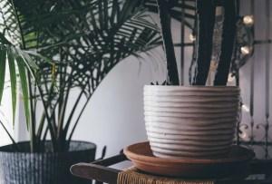 Tips para cuidar a tus plantas durante el invierno