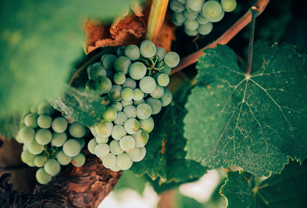 La guía definitiva para: enamorarte del vino blanco - vino-blanco-3