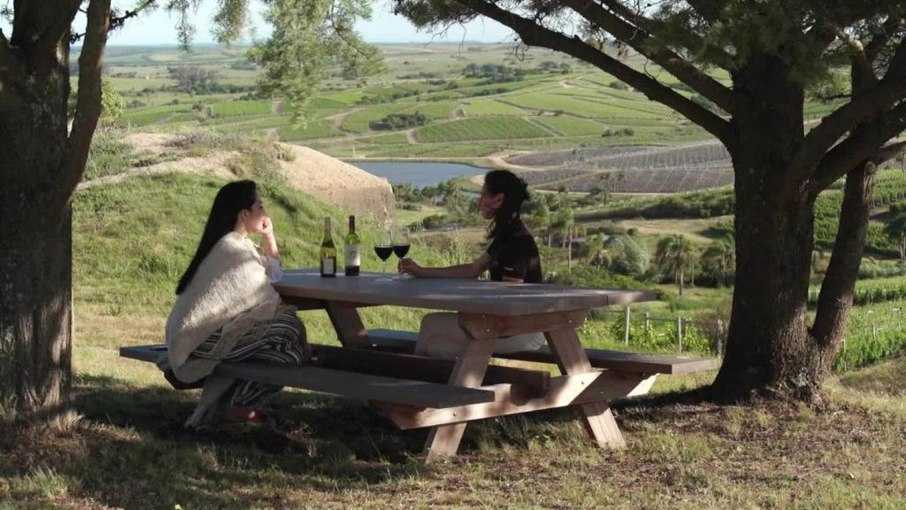 Bodega Garzón, parada obligada para amantes del vino en Uruguay