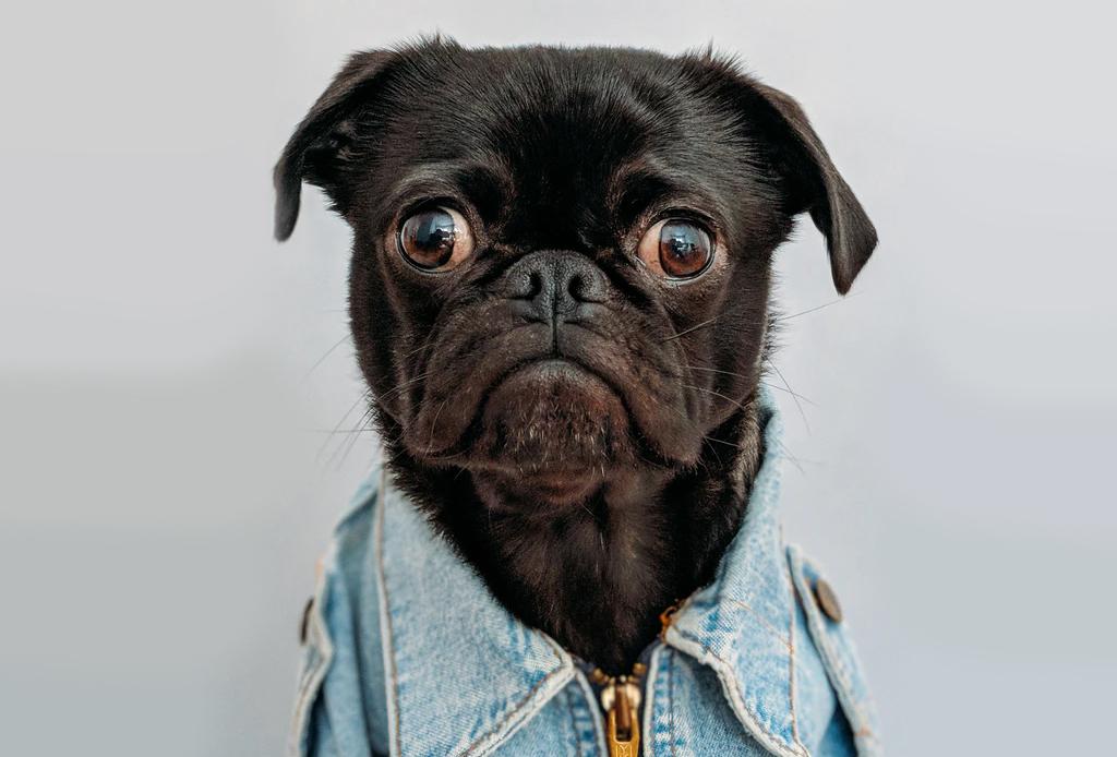¿Ya conoces estas marcas mexicanas de ropa para perro?