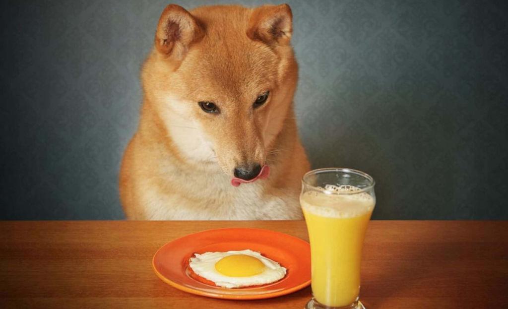 Estos son los alimentos que sí le puedes dar a tu perro sin riesgos