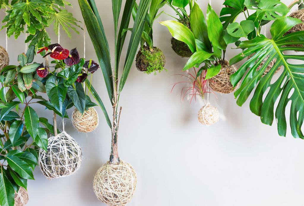 Kokedama: aprende a cultivar tus plantas ¡sin maceta!