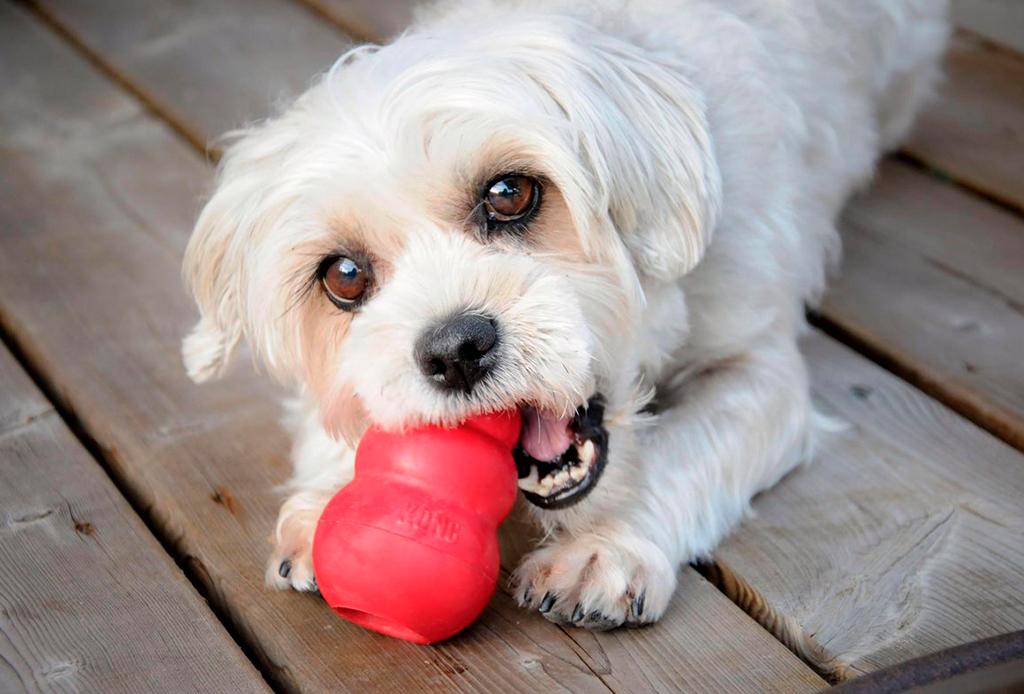 ¿Qué juguete Kong y qué relleno es el ideal para tu perro?