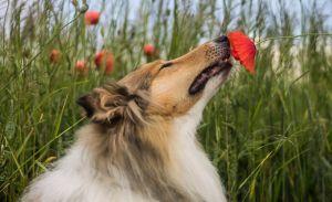 ¿Sabías que hay olores que tu perro no soporta?