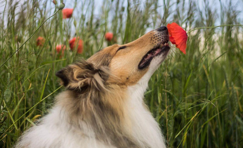 7 Juegos para entretener a tus perros en casa durante la cuarentena - perro-2