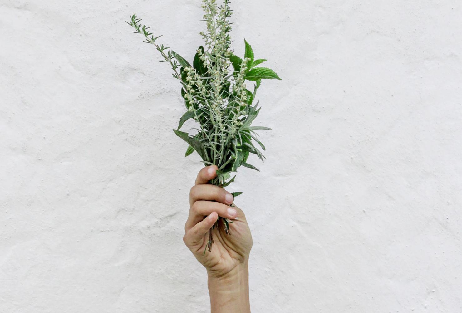 5 plantas antivirales que deberías conocer