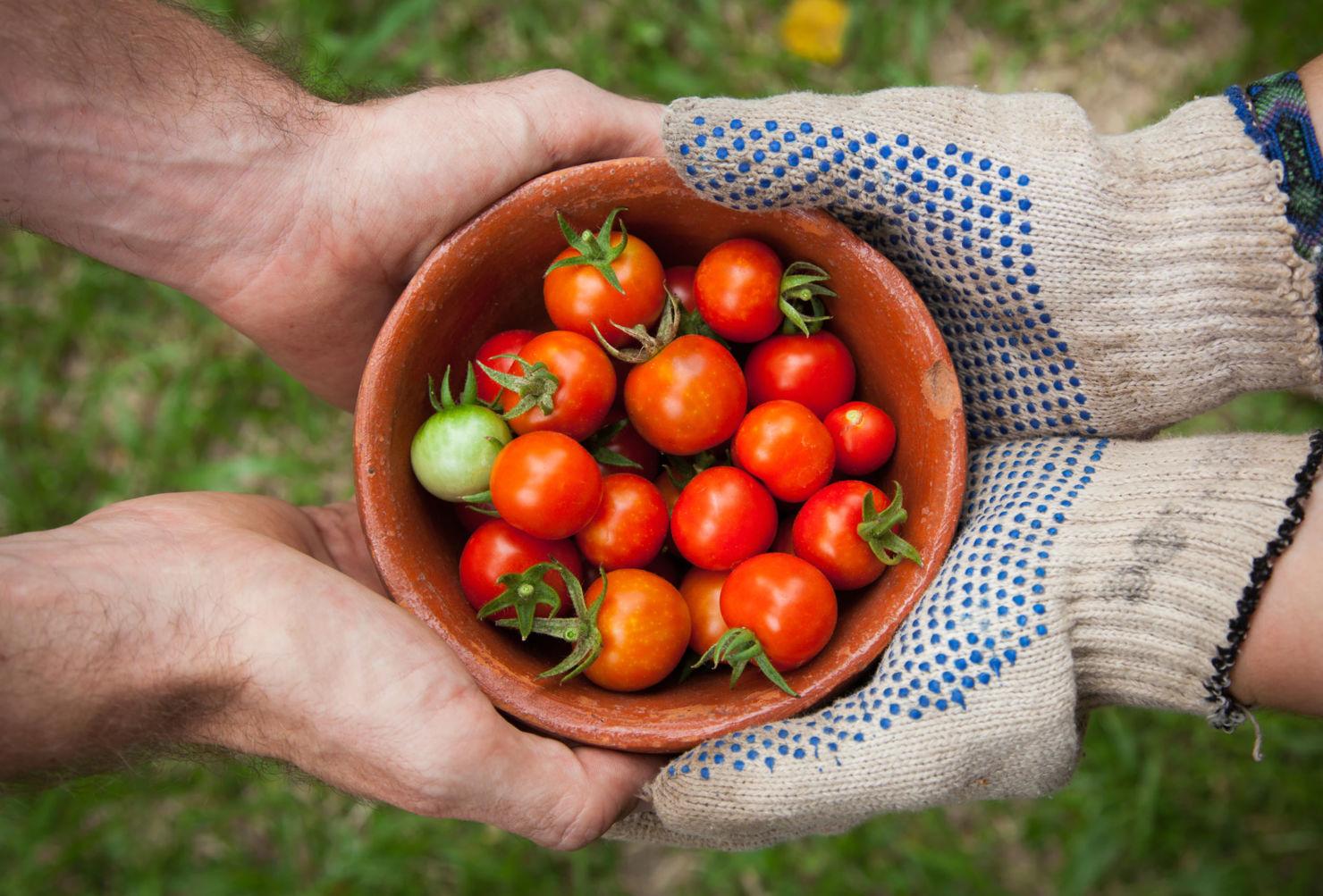 Si quieres hacer tu huerto casero, estas son las frutas y verduras más fáciles de cosechar