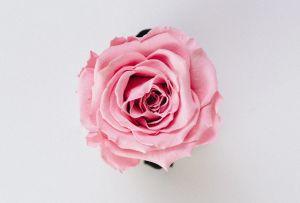 Conoce los beneficios del aceite de rosas e inclúyelo en tu rutina de belleza