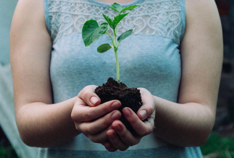 El paso a paso para trasplantar una planta a otra maceta - como-trasplantar-planta-a-otra-maceta-4