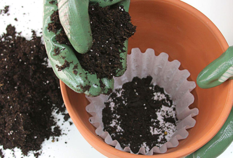 El paso a paso para trasplantar una planta a otra maceta - como-trasplantar-plantas-a-otra-maceta-3