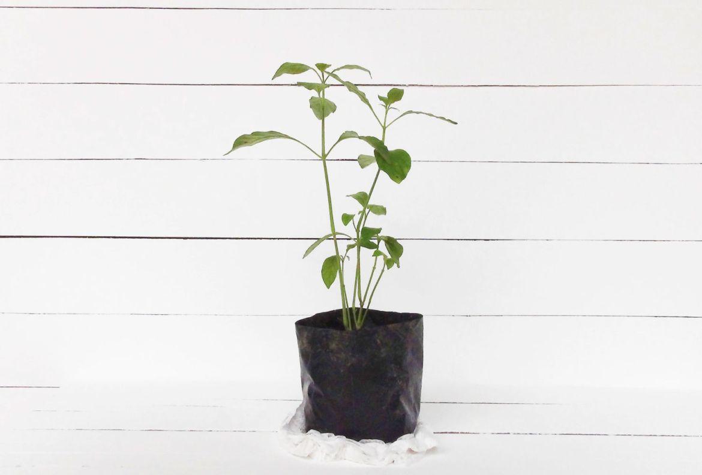 El paso a paso para trasplantar una planta a otra maceta - como-trasplantar-una-planta-a-otra-maceta-2