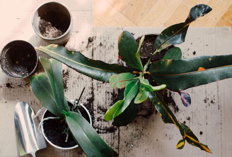 El paso a paso para trasplantar una planta a otra maceta - como-trasplantar-una-planta-a-otra-maceta-6