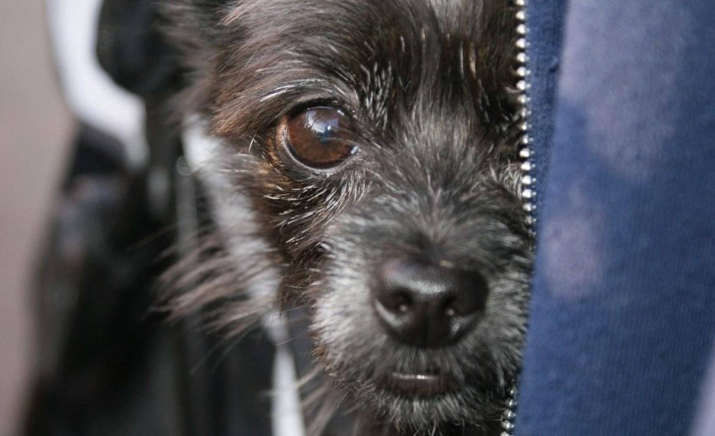 Consejos para cuidar a tu primera mascota sin problemas - perro-adoptado