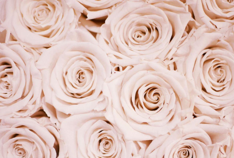 Conoce los beneficios del aceite de rosas e inclúyelo en tu rutina de belleza - rosas-1