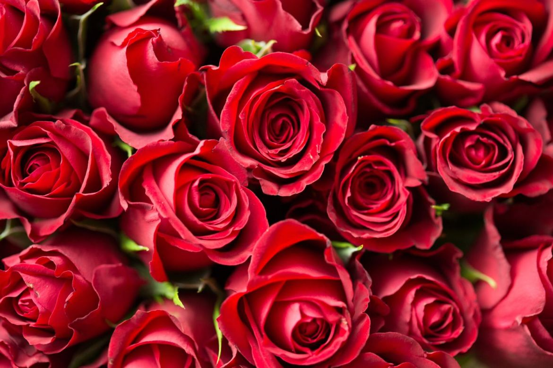 Cambia tu estado de ánimo con aromaterapia - rosas