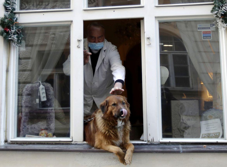 Consejos para cuidar a tu primera mascota sin problemas - veterinario