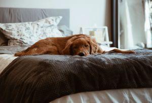 ¿Cómo preparar a tu mascota para cuando vuelvas a las actividades?