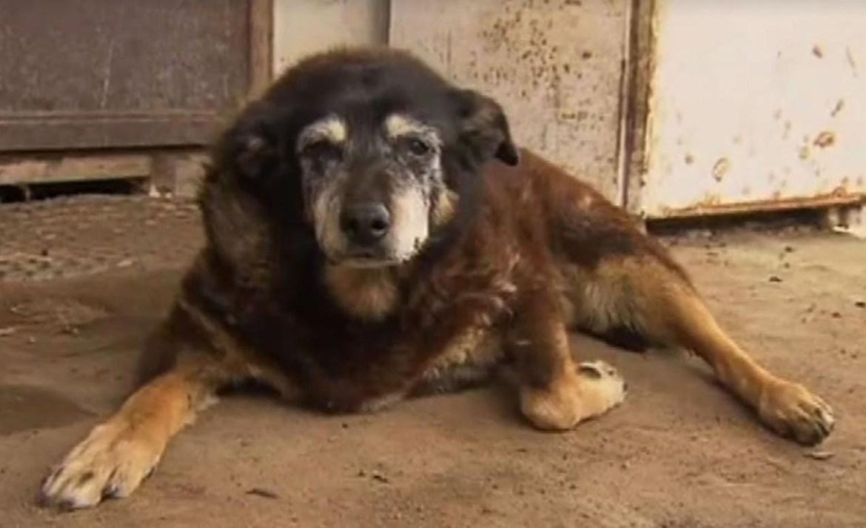 Estos son los perros más viejos de la historia - maggie