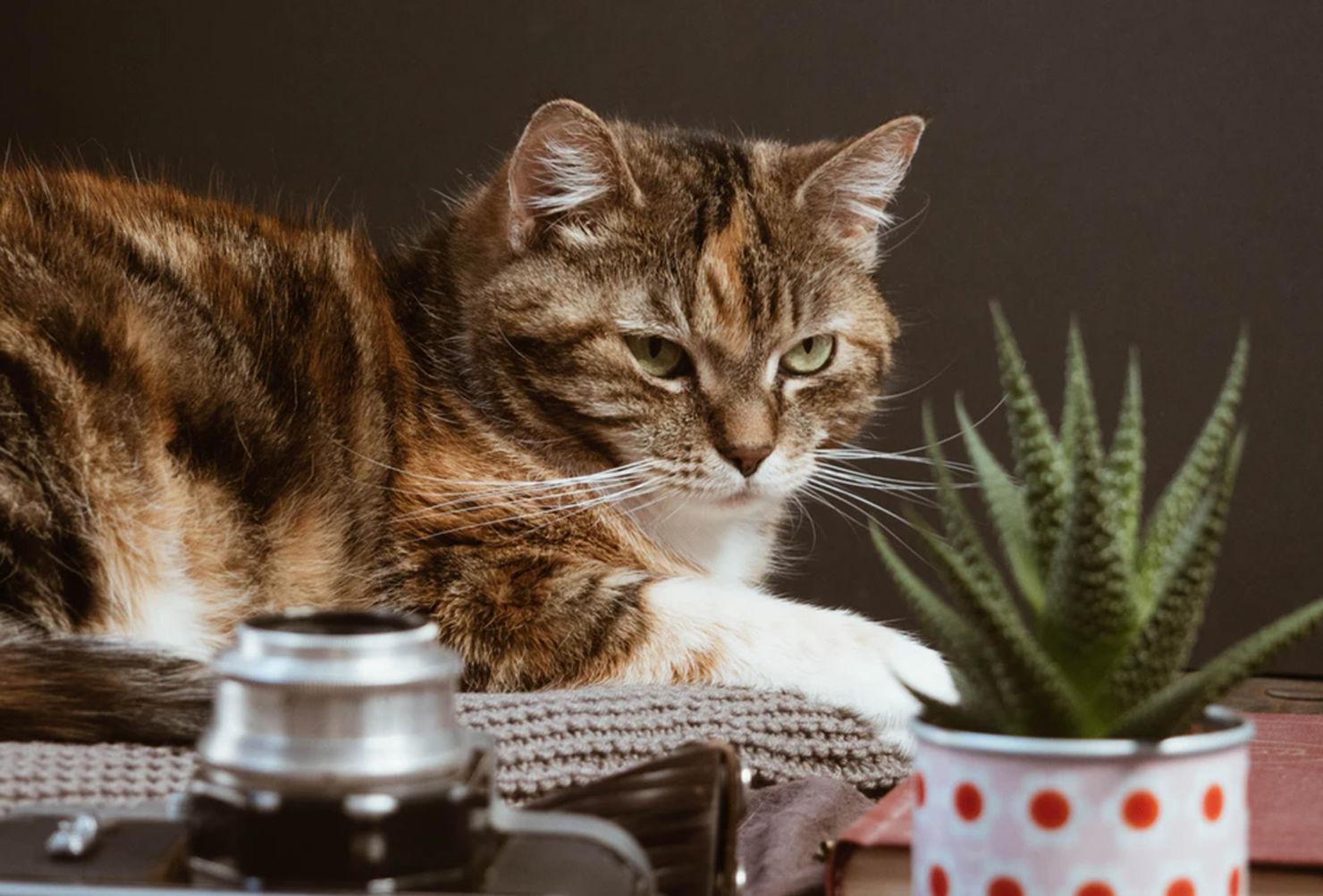Si tienes gatos en casa, estas plantas son perfectas para tu jardín interior