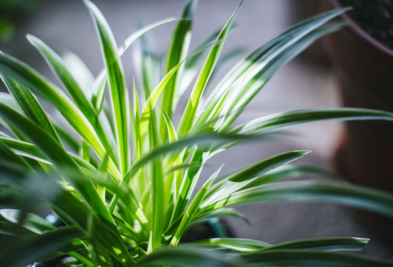 Si tienes gatos en casa, estas plantas son perfectas para tu jardín interior - plantas-seguras-para-gato-arancc83a