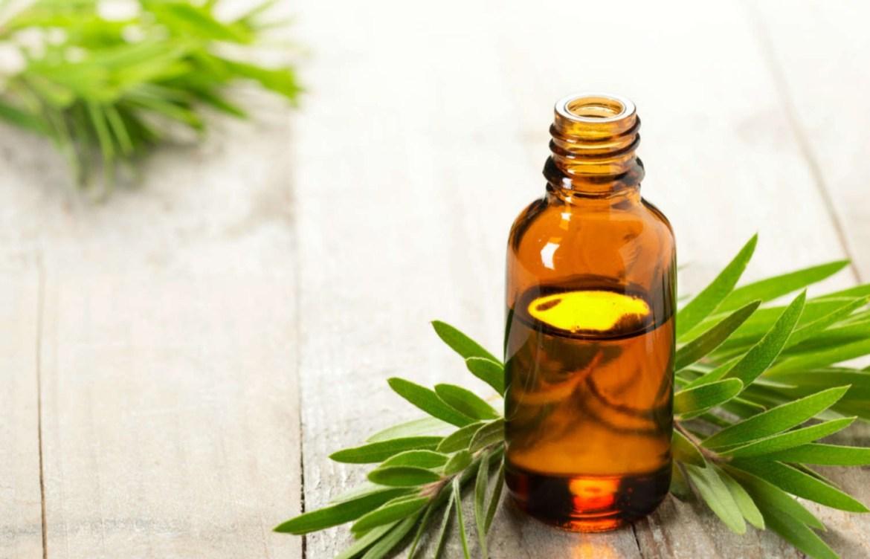 Pruebas estos aceites naturales que harán maravillas en tu cara - arbol-de-te