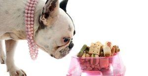 Prepara estos premios zero waste para tu perro