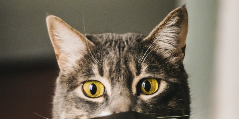 Cómo entender el lenguaje corporal de tu gato - leguaje-corporal-gatos-1
