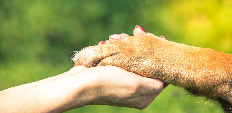 Enseñanzas espirituales que te da tu perro y no lo sabías