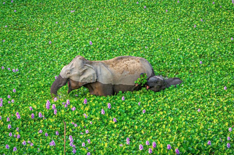 ¿Quieres reír? Estos son los finalistas del Comedy Wildlife Photo 2020 - foto-wildlife-elefante