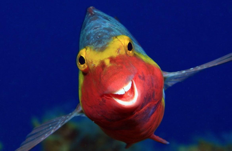 ¿Quieres reír? Estos son los finalistas del Comedy Wildlife Photo 2020 - foto-wildlife-pez