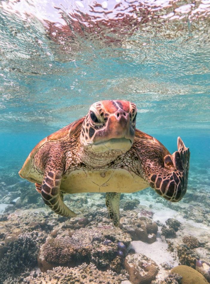¿Quieres reír? Estos son los finalistas del Comedy Wildlife Photo 2020 - foto-wildlife-tortuga