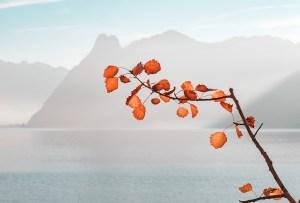 ¿Qué es el Zen? Lecciones japonesas que mejorarán tu vida