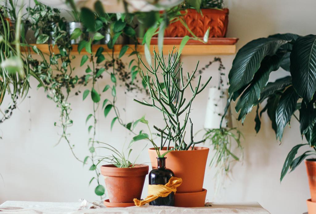 Este utensilio de cocina será tu nueva herramienta de jardinería - herramienta-jardineria-3