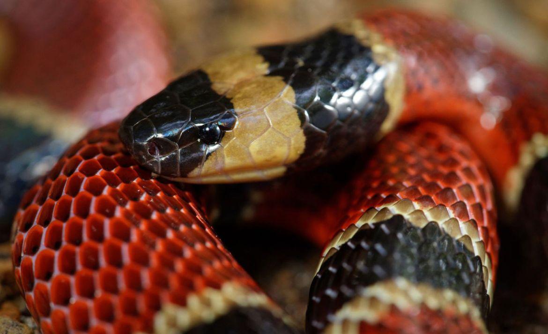 Estos animales son terapéuticos y tal vez no lo sabías - serpiente-terapia