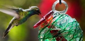 Los bebederos para colibríes más bonitos para tener en casa