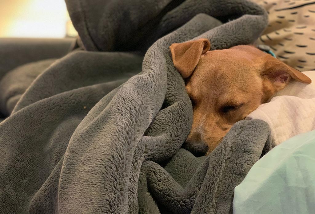 Deshazte del olor a perro con aceites esenciales - olor-a-perro-2