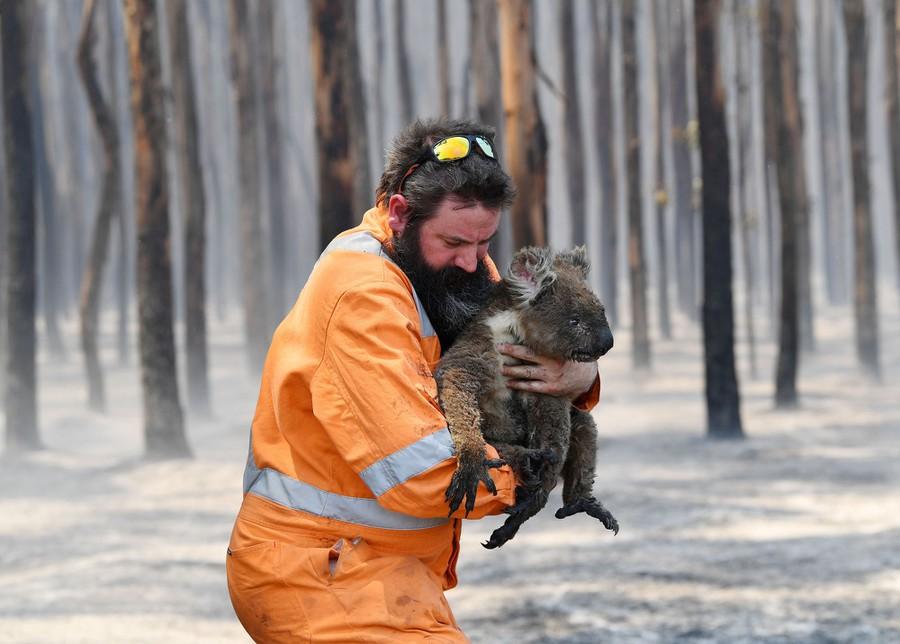 Las fotos más icónicas del 2020, memorias que te encantarán - foto-koala