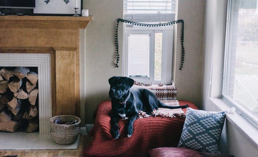 Tips si haces home office y no quieres descuidar a tu perro - esquina-perro-hogar
