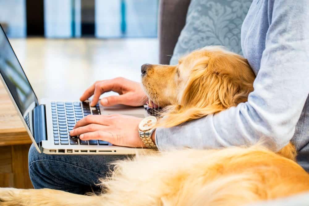 Tips si haces home office y no quieres descuidar a tu perro