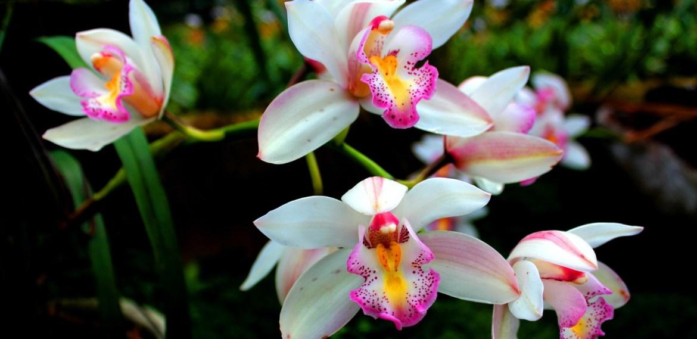 ¿Qué hacer con las orquídeas cuando pierden sus flores? - sabrina-24-3