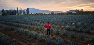 Conoce la iniciativa «México por Tierra» y enamórate de México