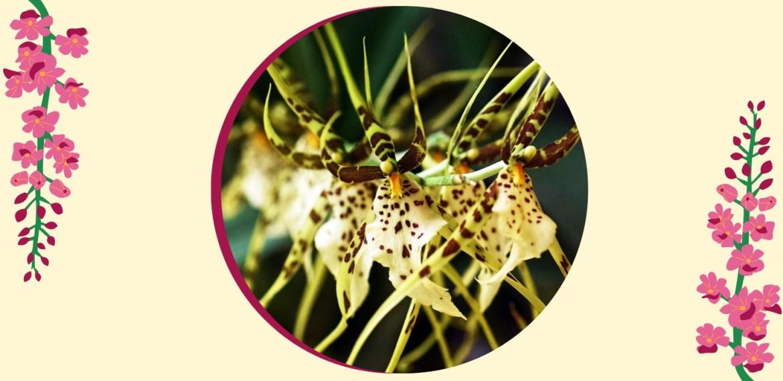 Tipos de orquídeas más populares que tienes que conocer - sabrina-24-1