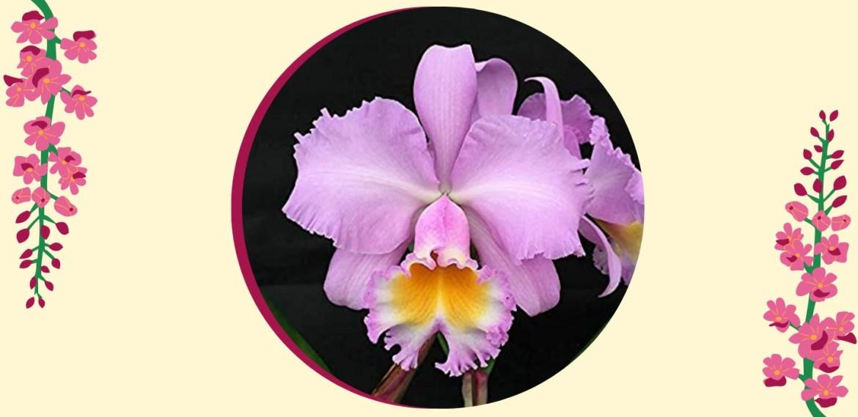 Tipos de orquídeas más populares que tienes que conocer - sabrina-25-2