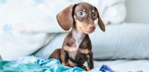 ¿Cómo proteger a tu mascota de un sismo? ¡Ojo aquí!