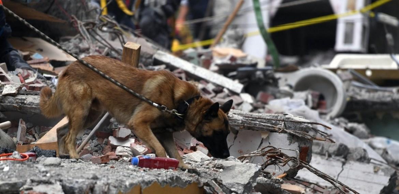 ¿Cómo proteger a tu mascota de un sismo? ¡Ojo aquí! - sabrina-57