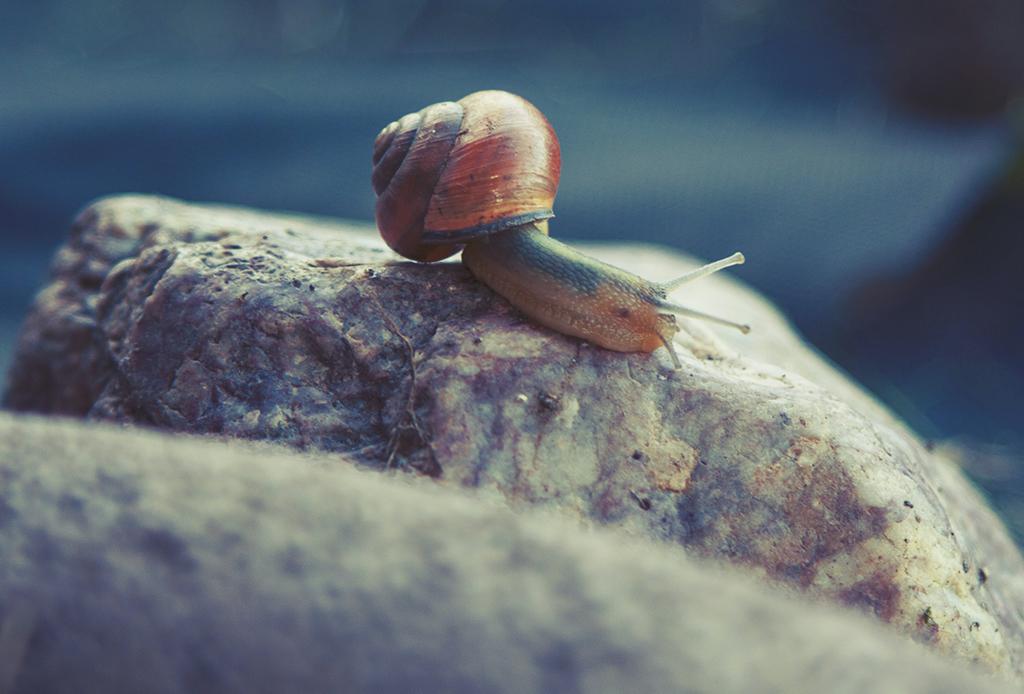 ¿Qué es el 'Slow Movement' y cómo puede cambiar tu vida? - slow-movement-2-1