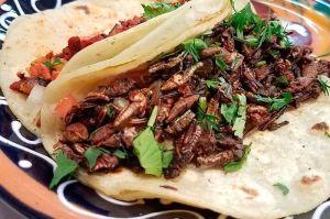 Platillo de la Semana: Tacos de Chapulín de Guzina Oaxaca