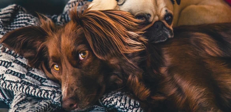 Situaciones o cosas que estresan a tus mascotas ¡Toma nota! - sabrina-79-1